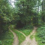 森の中の別れ道